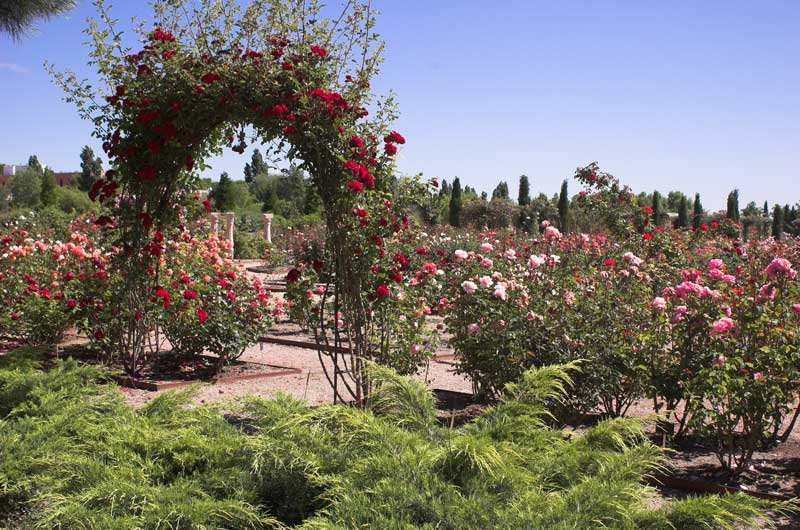 Real Jardín Botánico UAH
